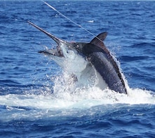 Big Game Fishing in Paradise