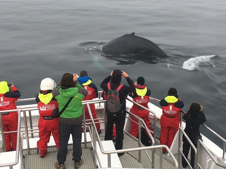 Classic Whale Watching from Akureyri