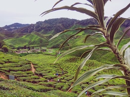 2 Days Cameron Highlands and Nature Tour from Kuala Lumpur