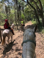 Jungle Horseback Adventure