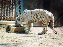 Bannerghatta National Park with Tiger Safari from Bangalore
