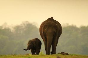 Backwaters and Wildlife Tour Kerala