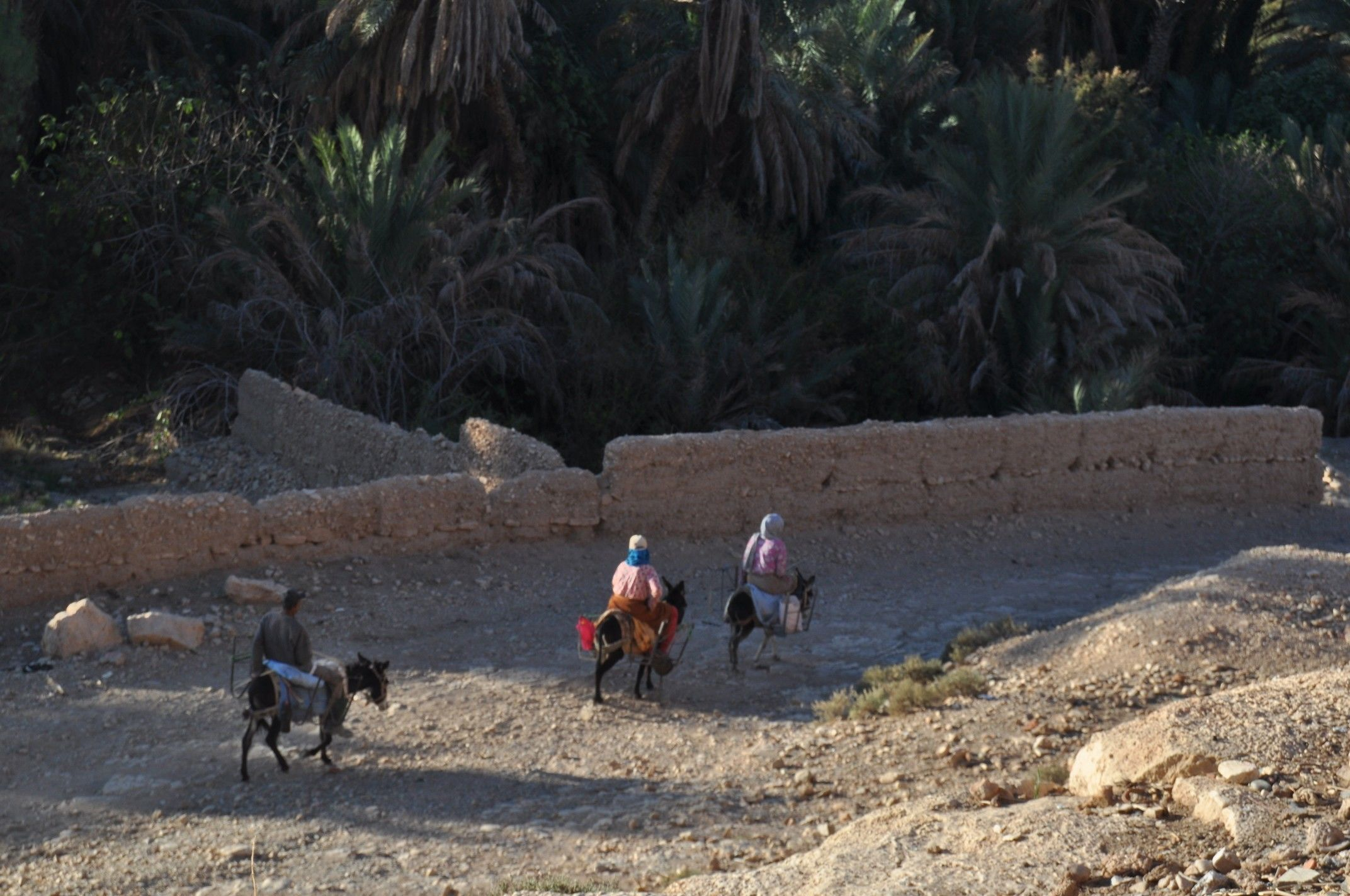 Day Trip to Ifrane and Atlas Mountains from Fez