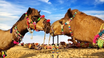 Car Hire for Rajasthan Tour Per Day Basis