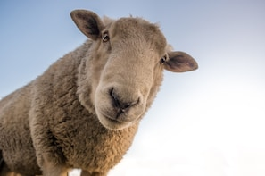 1 Day Tour/Shore Excursion Sheep Shearing-Wine Tasting-Lunch