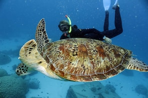 Great Barrier Reef Cruise - Explore departing Hamilton Is.