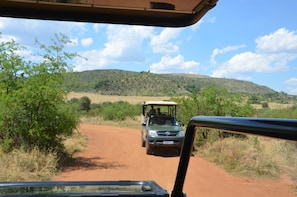 Pilanesberg Safari and Suncity - Full Day Tour
