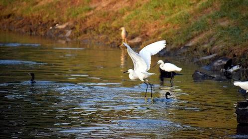 Bharatpur-Bird-Sanctuary.jpg