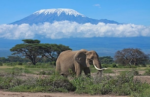 2 Days Amboseli National Park Private or Joining safari