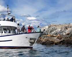 Boat Tour to Explore the Beagle Channel (HOT COCOA INCLUDED)