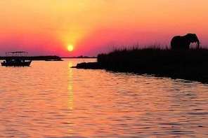 CHOBE SUNSET CRUISE FROM VICTORIA FALLS