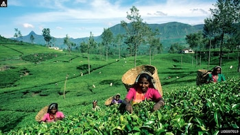 Haputale Day Tour from Nuwara Eliya (Private Tour)