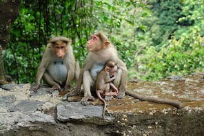 Silver Leaf Monkeys n Firefly Tour with Boat Ride n Seafood