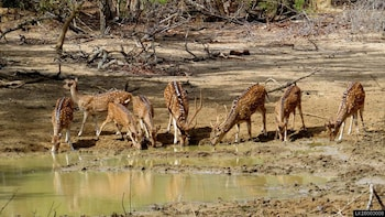 Yala National Park Safari From Tangalle (Private Tour)