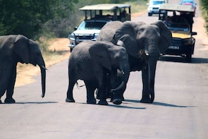 Johannesburg History Tour and Kruger National Park in 6 Days