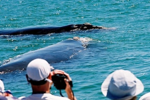 Whale watching and Hermanus winelands Private Tour
