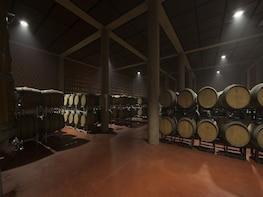 Super Tuscan wine tour from Livorno, Lucca, Pisa & Piombino
