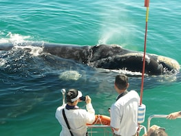Hermanus Whale watching boat tour with shared transfers