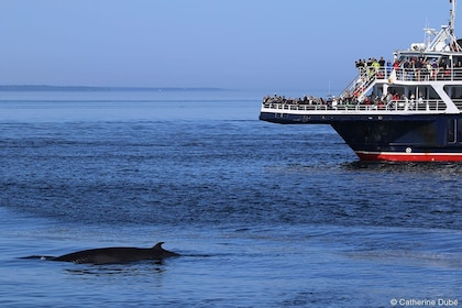 Boat Whale Watching Cruise -Tadoussac or Baie-ste-Catherine