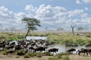 4 Days Migration Safari-Tarangire, Serengeti and Ngorongoro
