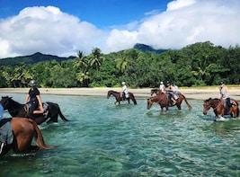 Cape Tribulation Beach Horse Riding