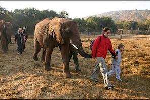 The Elephant Sanctuary and Lion Park - Day Tour