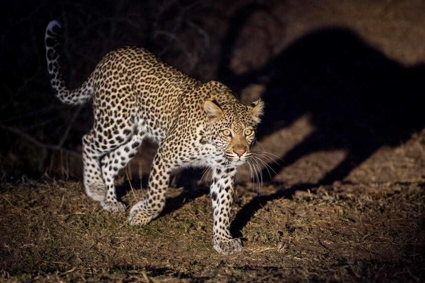 Show item 3 of 7. 2 Days / 1 Night - Kruger National Park Safari