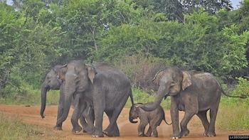 Udawalawe National Park Private Safari from Beruwala