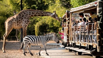 Chiang Mai Day or Night Safari Park