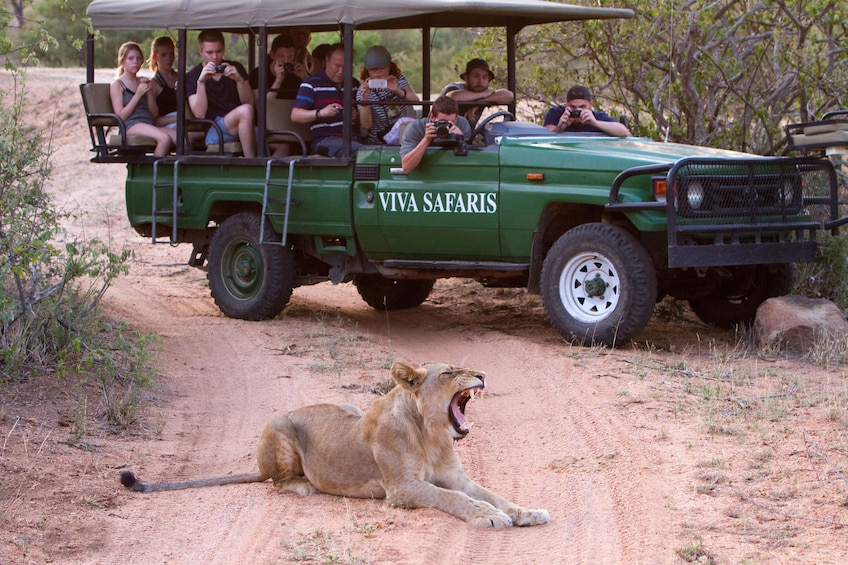 Show item 1 of 10. 3 Day Classic Kruger National Park Safari