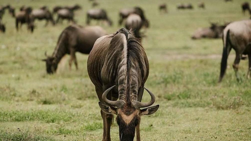 3 Days Short Safari to Tarangire, Lake Eyasi and Ngorongoro