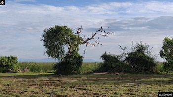 Bundala National Park Private Safari from Mirissa