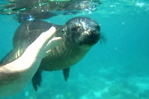 Snorkelling with Sea Lions in Punta Loma (from Puerto Madryn)