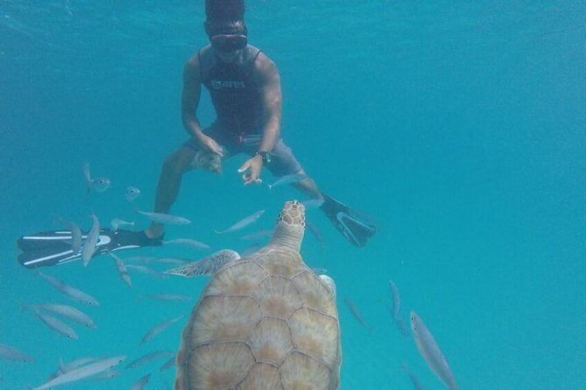 "Show item 1 of 12. Barbados ""Shared"" Turtle Swim and Shipwreck Tour"