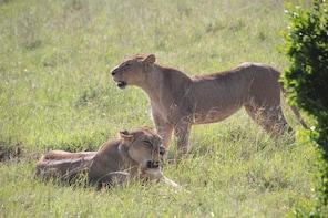 5 Days Maasai Mara, Lake Naivasha, Lake Nakuru Safari