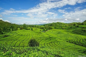 Exploring Tea Plantation at North Bandung