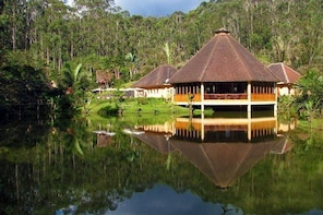 Full-Day Andasibe-ANALAMAZAOTRA Special Reserve Private Tour from Antananar...