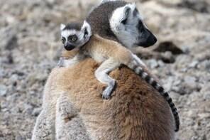 Madagascar Tripping