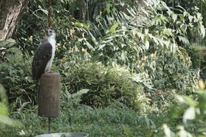 Davao Philippine Eagle and Waling-waling Tour
