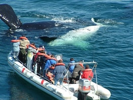 From Puerto Madryn: Valdes Peninsula Full-Day Tour