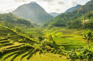 From Yogyakarta: Selogriyo Scenic Rice Terraces Private Tour