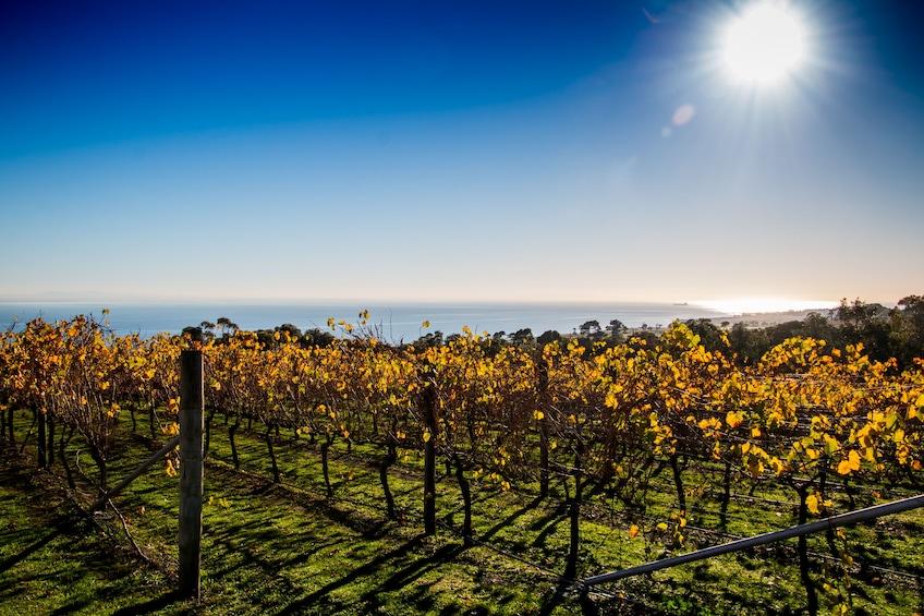 Show item 1 of 7. Full day - Bellarine Food and Wine Taste Trail
