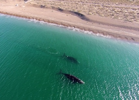 From Puerto Madryn: El Doradillo Beach and Whale Encounter