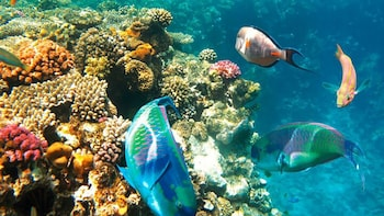 Best Snorkelling in Taba Egypt