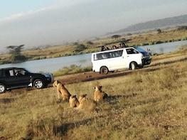 FULL DAY Nairobi N.Park,Elephant,Giraffe,Karen and Bomas