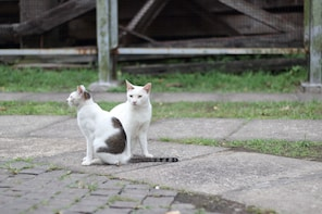 Private half day tour to Chiufen and Houtong Cat Village