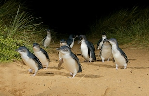 Full day -French Island & Phillip Island Wildlife Expedition