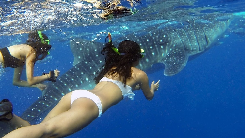 Show item 1 of 4. Oslob Whale Shark Watching Tour