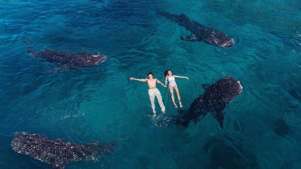 Show item 2 of 4. Oslob Whale Shark Watching Tour