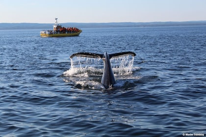 2H Zodiac Whale Watching Cruise - Tadoussac or Baie-Ste-C.